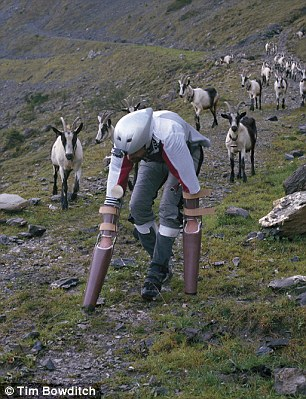 a-researcher-spends-time-as-a-goat-in-a-herd-and-the-reason-would-certainly-disturb-you-12