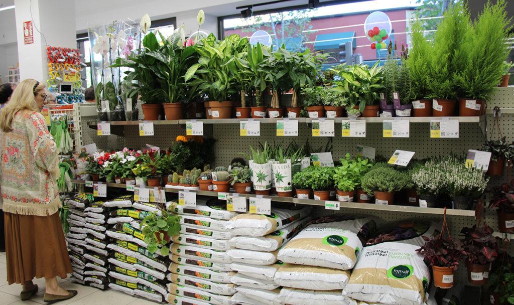 Plantas en una tienda de proximidad.